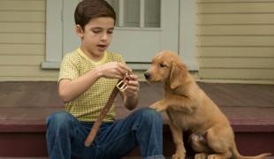 8 film con cani protagonisti che scaldano il cuore a tutte le età