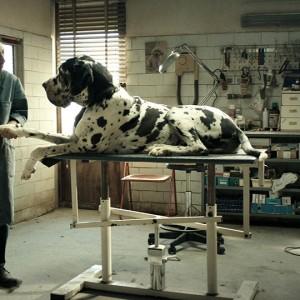 Nastri d'Argento 2018, i vincitori: trionfa Dogman di Matteo Garrone