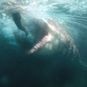 Shark - Il primo squalo, Ben Wheatley sarà il regista del sequel